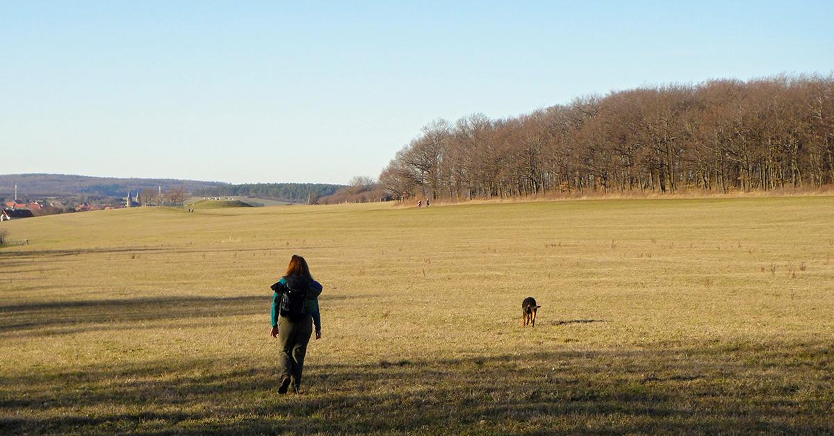 Wandererin mit Hund bei Drübeck