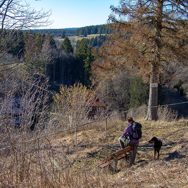 Aussicht Bocksberg im Harz