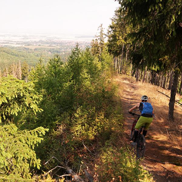 Mountainbiker-Abfahrt bei Darlingerode