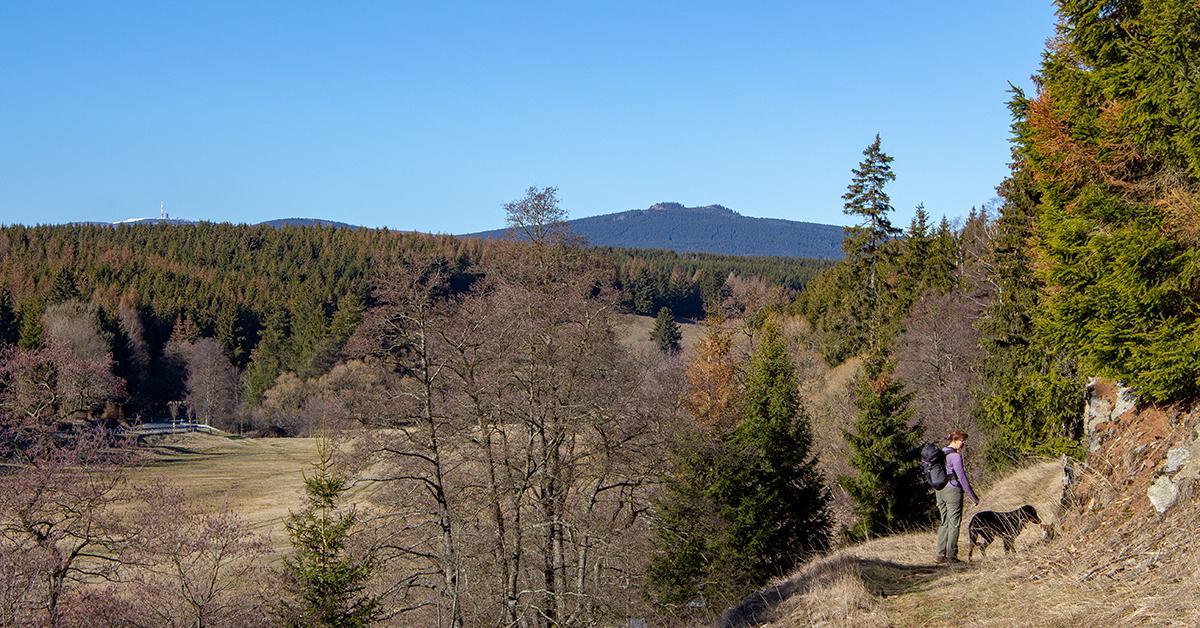 Wandern zwischen Tanne und Königshütte