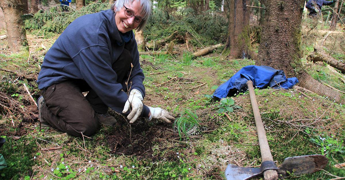 Freiwillige Helfer pflanzen Bäume im Randbereich des Nationalpark Harz © Nationalpark Harz, Mandy Gebara